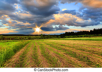 Oblique field of wheat on a sunset