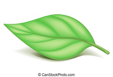 Oblonged green leaf on small stem isolated illustration -...