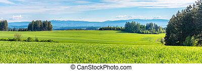 obr, czech:, čech, kopcovitý, krkonose, republic., mladický hora, městská silueta, krajina