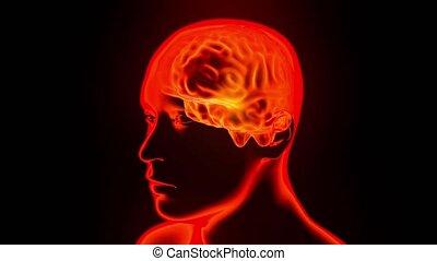 obracający, mózg, głowa, hologram, pętla