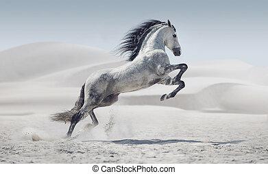 obraz, koń, biały, przedstawiając, galopowanie