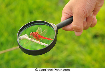 child hand takes the magnifying glass to observe the dragonfly