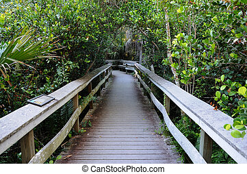 Observation Trail in the Everglades National Park, Florida USA