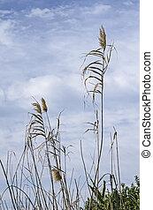 obsiewa trawą