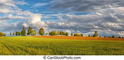 obzor, autumn krajina, cesta, bojiště, venkov, -, louka, strom, běloba mračno
