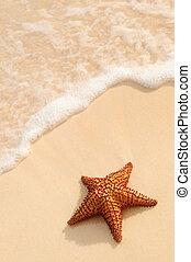 océan, etoile mer, vague