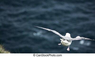 océan, mouette, super, voler, ralenti, sur