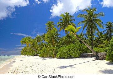 océano, tropical, indio, bosque, playa, agradable