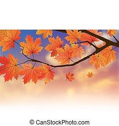 ocaso, arce, leafs