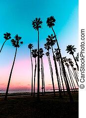 ocaso california, árvore palma, filas, em, santa barbara