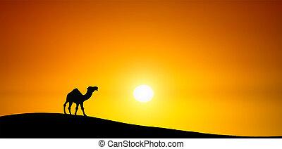 ocaso, camello