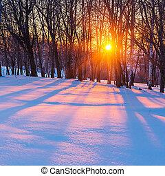 ocaso, en, invierno, bosque