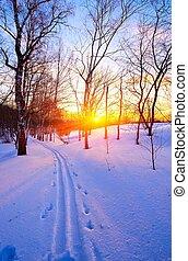 ocaso, en, invierno, parque