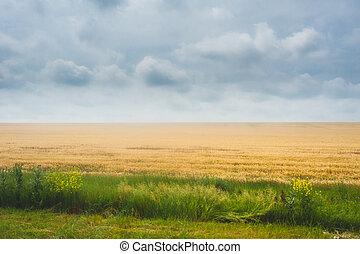 ocaso, encima, agrícola, verde, field., cielo dramático, y, nubes