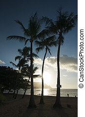 ocaso, encima, bahía del hanalei, kauai