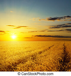 ocaso, encima, campo agrícola