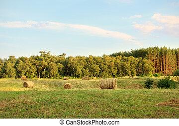 ocaso, encima, campo de la granja, con, fardos de heno