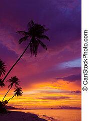 ocaso, encima, el, océano, con, tropical, árboles de palma,...
