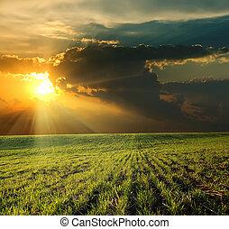 ocaso, encima, verde, campo