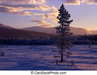 ocaso, paisaje, en, invierno