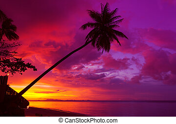 ocaso, palmera, silueta, encima, océano