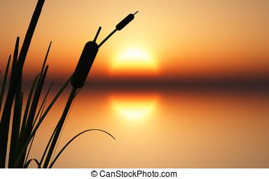 ocaso, salida del sol, de, agua