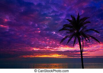 ocaso, salida del sol, palmera, encima, mediterráneo