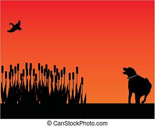 ocaso, silueta, perro, caza, pájaro