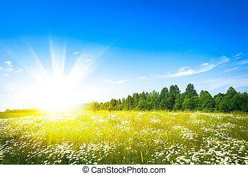 ocaso, sol, y, campo, de, verde, fresco, pasto o césped
