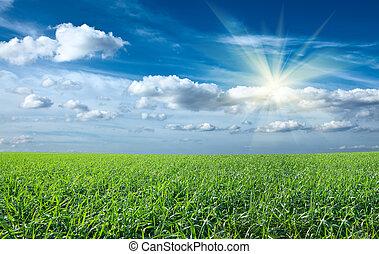 ocaso, sol, y, campo, de, verde, fresco, pasto o césped, debajo, cielo azul