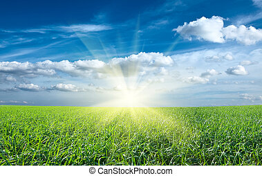 ocaso, sol, y, campo, de, verde, fresco, pasto o césped,...