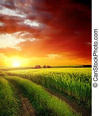 ocaso vermelho, sobre, estrada rural, perto, campo verde