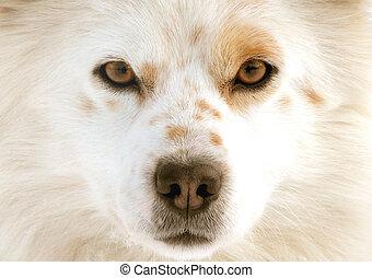 occhi, cane