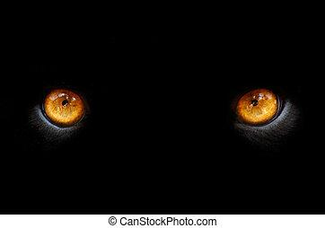 occhi, di, uno, pather