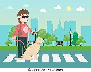 occhiali da sole, zebra, cane, canna, incrocio, uomo, doggy...