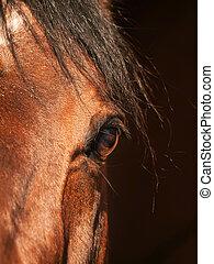 occhio, di, cavallo baia, closeup, in, scuro