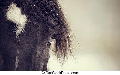 occhio, di, uno, sportivo, cavallo, closeup.