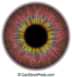 occhio, iride