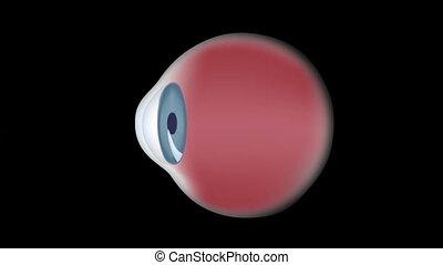 occhio umano, anatomia, e, comune, difetto