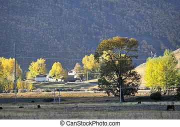 occidentale, porcellana, alberi autunno, xinduqiao