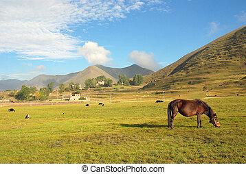occidentale, porcellana, altopiani, ranch