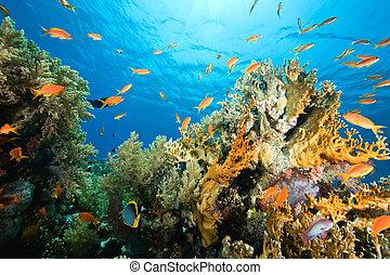 oceaan, coraal, en, visje