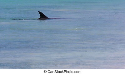 Ocean and a dolphin's fin in slow motion - A medium shot of...