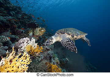 ocean and hawksbill turtle
