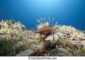 ocean and lionfish