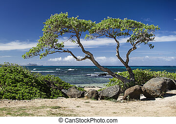 Ocean and tree