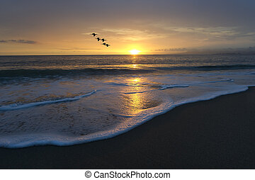 Ocean Beach Sunset Birds Flying