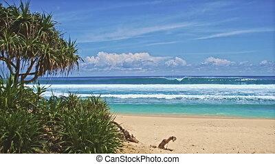 Ocean beach with green trees
