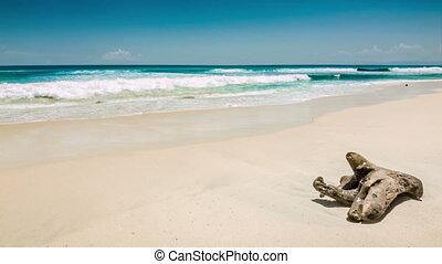 Ocean beach with old snag