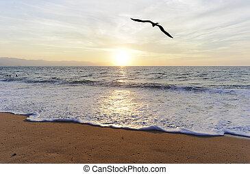 Ocean Bird Silhouette